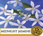 Midnight Jasmin